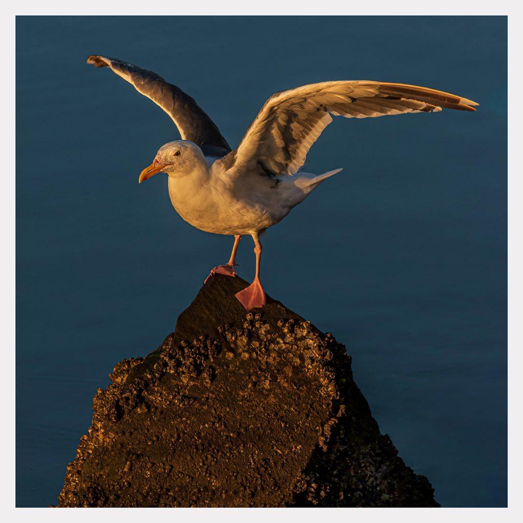 Stunning Seagull - Item #LS04 - $178