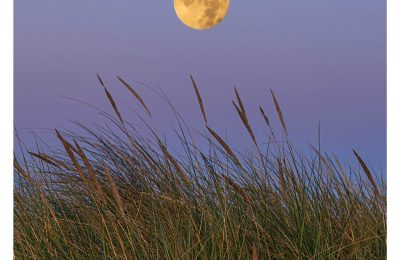 Beachgrass Moon - Item No. LS15 - $173