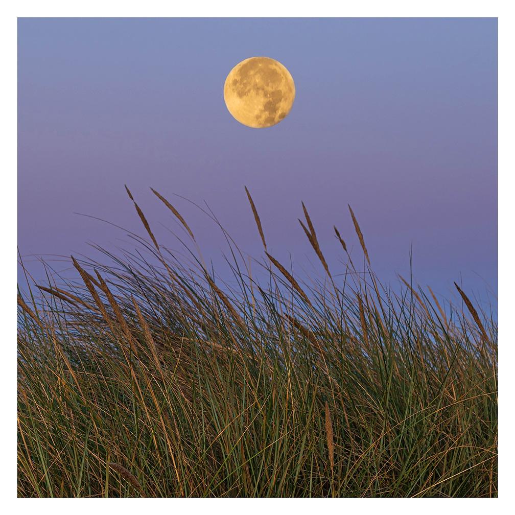 Beachgrass Moon - Item No. LS15 - $173