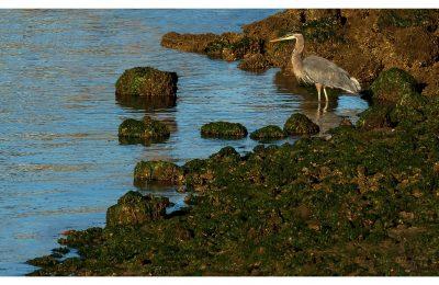 Heron Sunrise - Item No. LS19 - $188