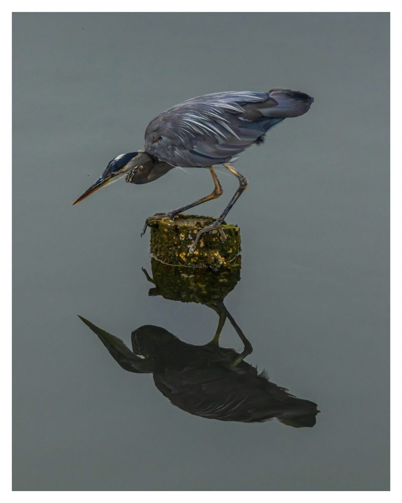 Heron Reflection - Item No. LS30 - $190