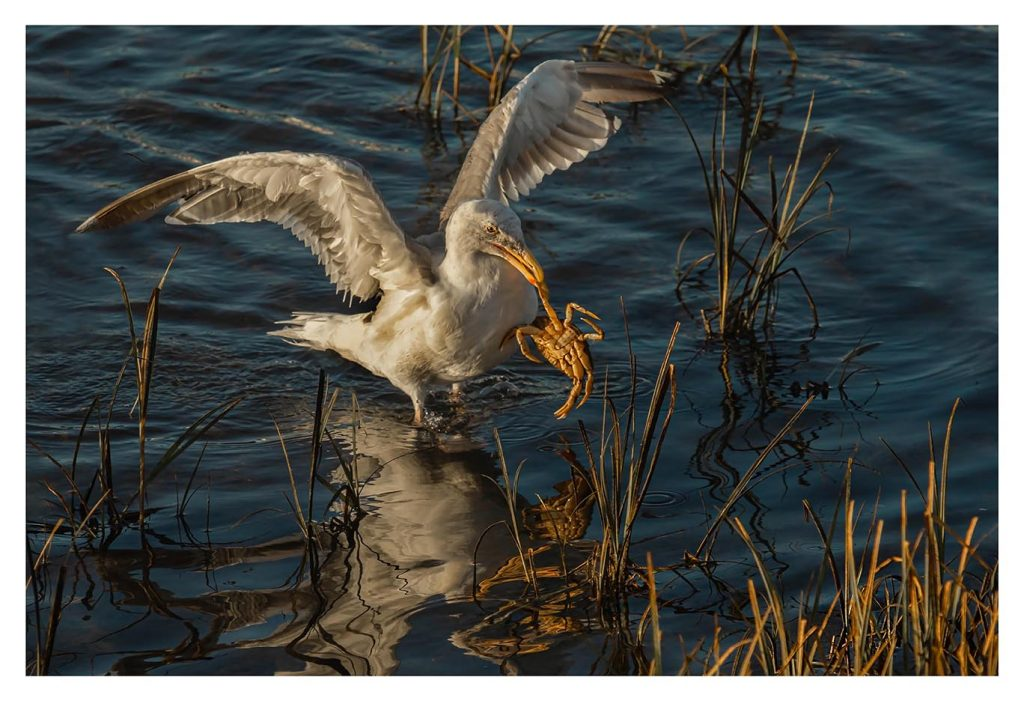 Seagull Crabbing - Item No. LS41 - $195
