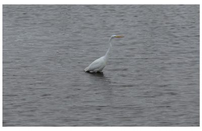 Still Egret - Item No. LS42 - $227