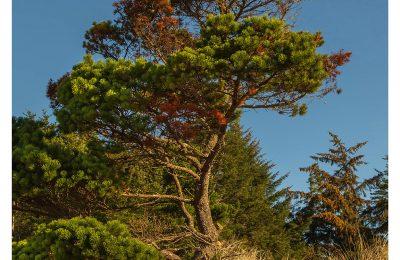 Morning Tree - Item No. LS44 - $223