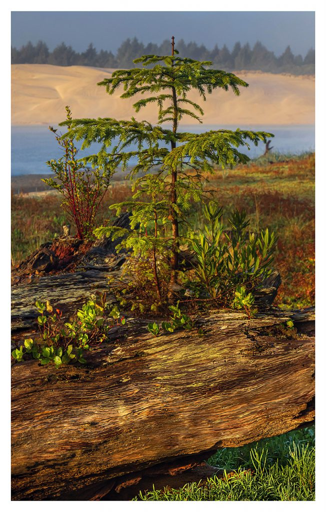 Little Tree - Item No. LS45 - $212