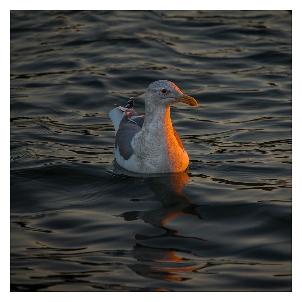 Seagull Sunrise - Item No. LS51 - $170