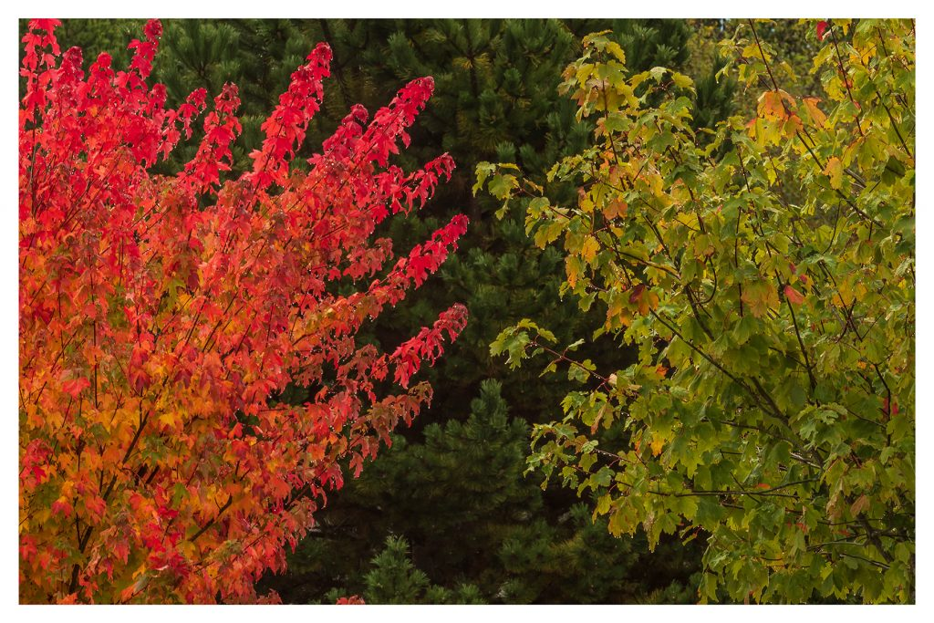 Three Shades of Autumn - Item No. LS52 - $221