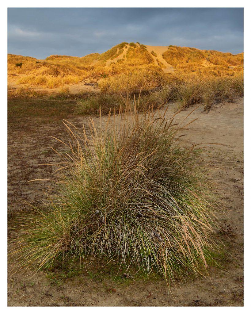 Beach Grass and Dunes - Item No. LS54 - $232